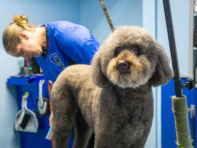 Best Dog Groomer Louisville Pawsitively Dogs